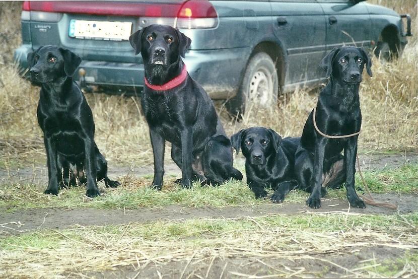 Felina, Crusy, Griffin und Yanac - 06.01.2001