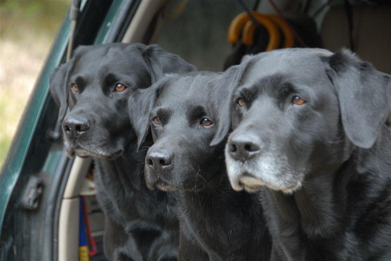Ivanhoe, Griffin und Crusy - 14.04.2008