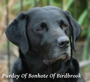 Purdey of Bonhote